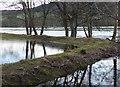 NN9552 : Flooding beside the River Tay : Week 1
