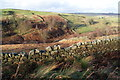 SE0035 : Dry stone wall above South Dean Beck by Bill Boaden