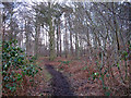 SJ6369 : Woodland track near Whitegate by Stephen Craven
