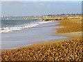 SZ1690 : Shingle beach, Hengistbury Head : Week 1
