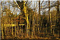 TQ4463 : Late afternoon winter light on strip woodland, Farnborough by Helena Hilton