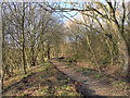 SJ7789 : Footpath at Timperley Flood Storage Basin by David Dixon