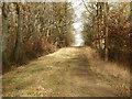 SP9230 : Kings Wood by Michael Trolove