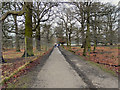 SJ7386 : Dunham Park, South Avenue by David Dixon