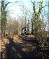 SE4528 : Bridlepath through Newfield plantation at  Fairburn Yorkshire by derek dye