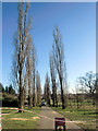TQ3095 : Poplars Down in Oakwood Park, London N14 by Christine Matthews