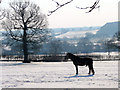 TQ2999 : Horse on  Farmland, Botany Bay, The Ridgeway, Enfield by Christine Matthews