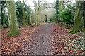 SU8393 : Toweridge Lane by Graham Horn