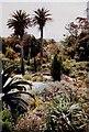 SV8914 : Tresco Gardens by nick macneill