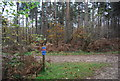 TQ2834 : National Cycleway 20, Tilgate Forest by N Chadwick
