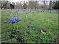 SJ7387 : Winter flowers Dunham Massey by Peter Turner
