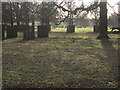 SJ7386 : Distant deer Dunham Massey by Peter Turner
