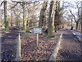 SJ7386 : Deer Sanctuary Dunham Massey by Peter Turner
