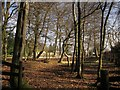 ST1007 : Adventure play area, Forest Glade by Derek Harper