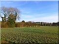 SP8704 : Farmland, Wendover by Andrew Smith