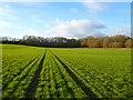 SU2994 : Farmland, Faringdon by Andrew Smith