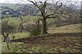 SJ9880 : Footpath to Kettleshulme by Bill Boaden