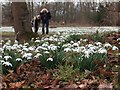 SK6185 : Hodsock Priory - February Snowdrops by Neil Theasby