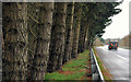 J3655 : Road landscaping near Ballynahinch by Albert Bridge