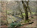 SK1587 : Backside Wood, Jaggers Clough by Andrew Hill
