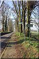 SJ8869 : Church Lane Gawsworth by Peter Turner