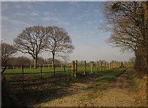 SX3388 : Track near Daisyland by Derek Harper