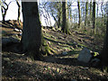 SJ3403 : Rocks in College Coppice by Dave Croker