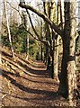 TQ1853 : Cockshott Wood in early March : Week 10