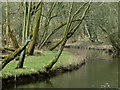SK1673 : Trees by a bend in the River Wye by Andrew Hill