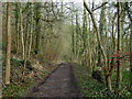 SK1373 : Woodland path by the River Wye by Andrew Hill