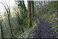 SK1770 : Footpath across steep wooded slope by Andrew Hill