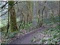 SK1769 : Footpath in Great Shacklow Wood by Andrew Hill