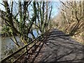 SX0170 : Camel Trail beside River Camel in Gaff Wood by David Smith
