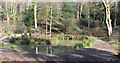 TQ8109 : Pond in Summerfield Woods by Oast House Archive