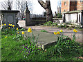TQ3078 : Daffodils in the Garden Museum by Stephen Craven