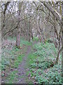 TL9905 : Footpath through Curry's Copse by Roger Jones