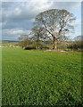 SP6812 : Arable land near Home Farm by Graham Horn