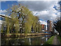 TQ1883 : Willow by the canal, Alperton by Derek Harper
