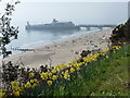 SZ0990 : Bournemouth: beach view over East Cliff daffodils by Chris Downer