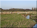 SJ6199 : Bridge Over Hey Brook by David Dixon