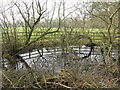 SJ6084 : Pond at Dennow Farm by M J Richardson