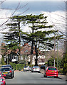 TQ3865 : Cedars, Woodland Way by Stephen Richards