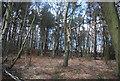SU8450 : Managed Access Woodland by N Chadwick