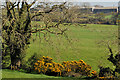 J4075 : Leafless trees near Craigantlet hill, Belfast by Albert Bridge