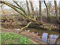 SJ7255 : Fallen tree over Valley Brook by David P Howard