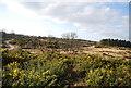 SU8351 : Heathland landscape by N Chadwick