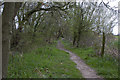 SJ6696 : The footpath at the edge of Hitchfield Wood by Ian Greig