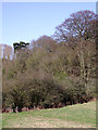 SO7394 : Woodland and pasture north-east of Bridgnorth, Shropshire by Roger  Kidd
