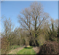 TL4150 : Near Harston in early spring by John Sutton