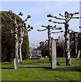 SU9597 : Pollarded lime trees, St Mary's churchyard, Old Amersham by Stefan Czapski